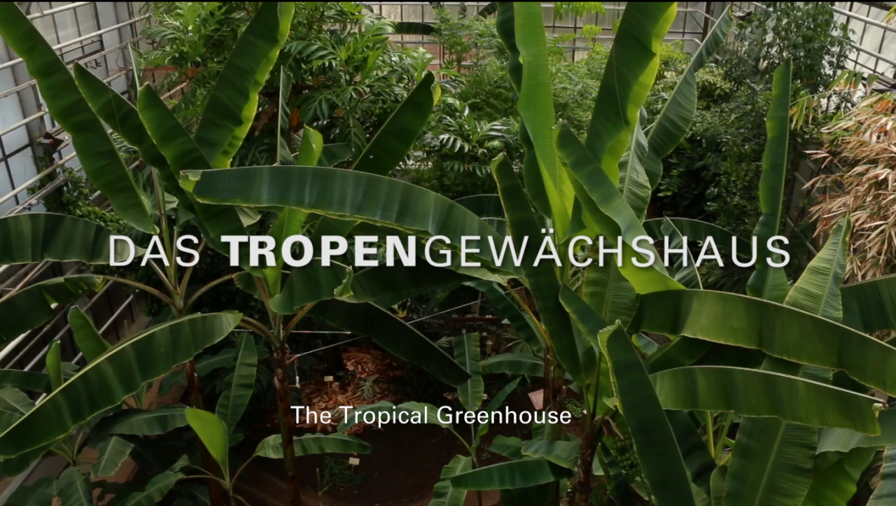 The Tropcial Greenhouse at the Faculty of Organic Agricultural Sciences