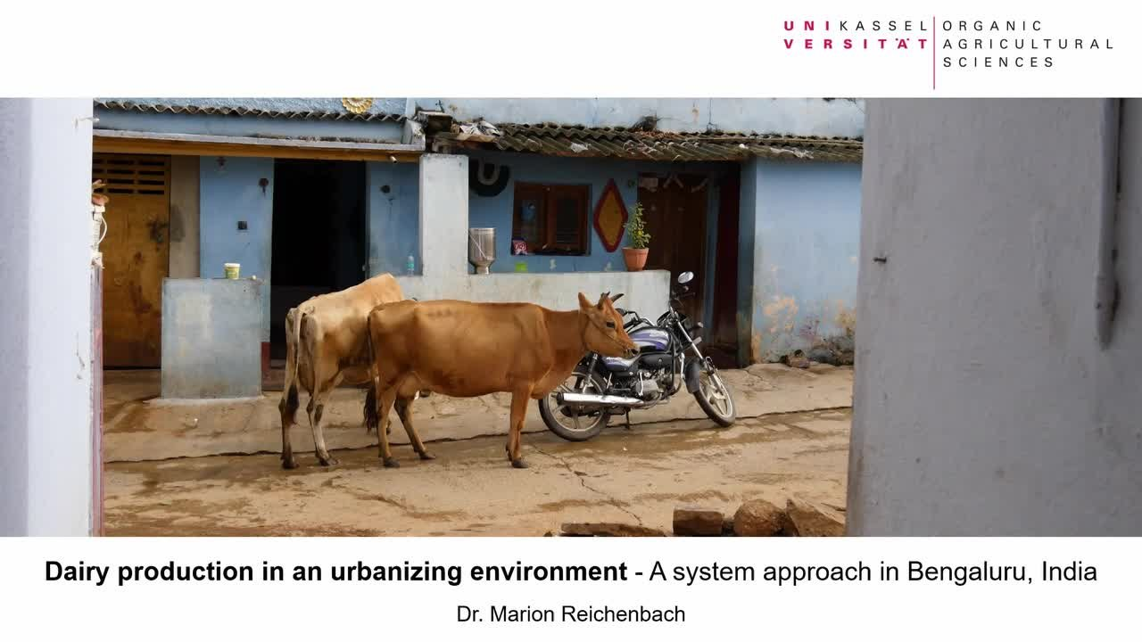 Dairy production in an urbanizing environment - A sytsem approach in Bengaluru, India (Dr. Marion Reichenbach)